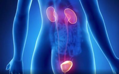 Zoom sur l'urètre et ses pathologies